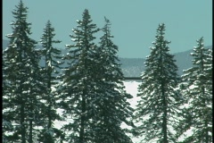 Snow Covered Sunny Day - stock footage