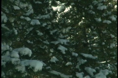Snow Covered Sunny Day Stock Footage