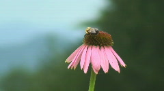 Insects on Flowers - HD Stock Footage
