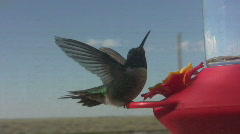 Hummingbirds Compete for Feeder Stock Footage