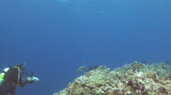 Diver Photographing Shark Stock Footage