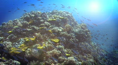 Fusilers Reef Scene HD Stock Footage