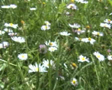 Flowers Fly Over Stock Footage