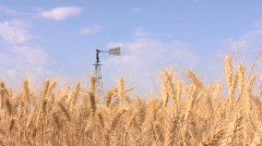 Wheat with old windmill Stock Footage