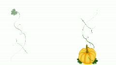 Pumpkin growing vines HD 1080 Stock Footage