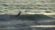 Stock Video Footage of Manhattan Beach Bird 02