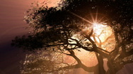 Stock Video Footage of Tree Light HD 1080p