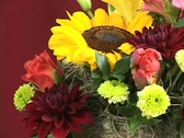 Stock Video Footage of FLOWERS 8
