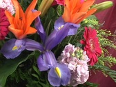 Stock Video Footage of FLOWERS 6