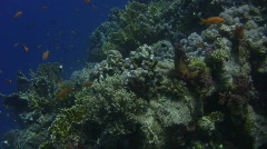 Coral Reef Gliding Climb - stock footage