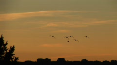 Sunrise at ruby hill-silhouette of geese flying Stock Footage
