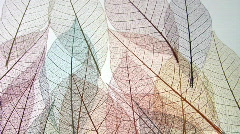 Fine leaf vein framework patterns. Stock Footage