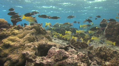 Shallow Coral Reef Stock Footage