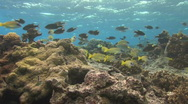 Stock Video Footage of Shallow Coral Reef