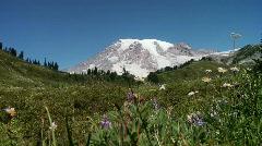 Mt. Rainier Meadow Stock Footage