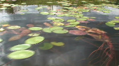 Lilly Pads on a Lake During Summer Time Stock Footage