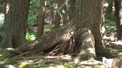 Forest Trees Zoom Out Stock Footage