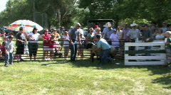 Lamb Day mutton bustin ride last M HD Stock Footage