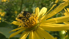 Bee on flower. Stock Footage