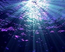 Underwater FX03 PAL Stock Footage