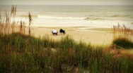 Dogs and Beachcomber Ocean Beach Surf Early Morning Stock Footage