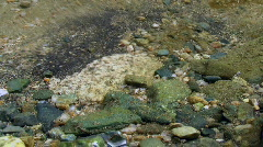 River Pebbles Stock Footage