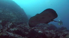 Sting Ray  - stock footage