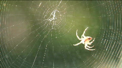 Stock Video Footage of Spider Spins Web Time Lapse