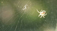 Spider Spins Web Time Lapse Stock Footage