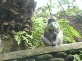 Monkeys 11 Stock Footage