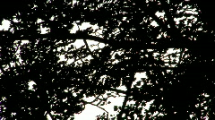 Sky Leaves Tree Plants Sillouette - stock footage