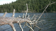 Dead tree in the lake. Stock Footage
