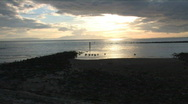 Stock Video Footage of Swans At Irvine Beach Zoom In Scotland