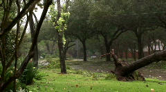 Ike fallen tree street pan Stock Footage