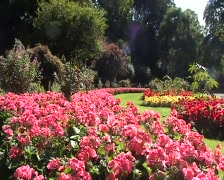 Red Flower Bed In Sunny Gardens Stock Footage