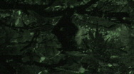 Stock Video Footage of Bat Hanging from Tree at Night