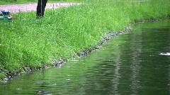 Dog on pond Stock Footage