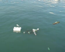 Garbage in the sea Stock Footage