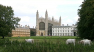 Stock Video Footage of Cattle grazing on The Backs with Kings College Chapel Cambridge England UK