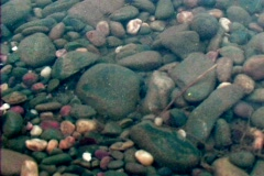 Stock Video Footage of Pebbles Below the Surface