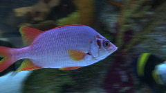 Pink & Orange Fish Stock Footage