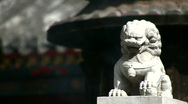 The lion 6 Stock Footage