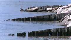 A Seagull perched on a broken down pier Stock Footage