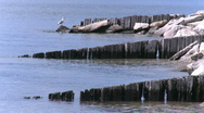 Stock Video Footage of A Seagull perched on a broken down pier