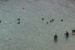 Divers preparing to dive 1 PAL Stock Footage