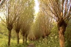 odd dutch trees - stock footage