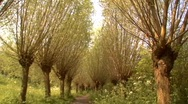 Odd dutch trees Stock Footage