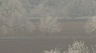 Hard frost - slow zoom out from trees 3 Stock Footage