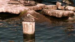 Tiltup pelicans rig Stock Footage