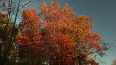 0706-B045 - Fall Foliage - MOS - stock footage